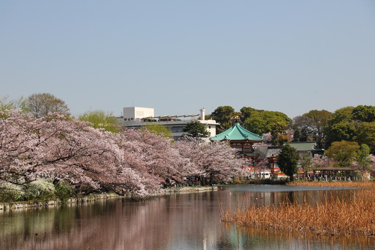 tokyo-ueno-park