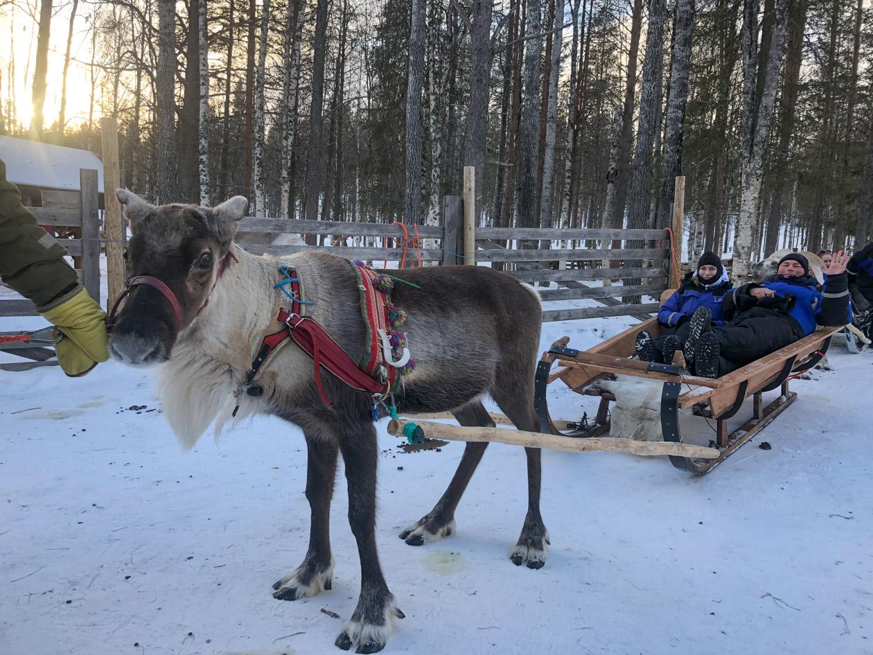 de kou van Lapland